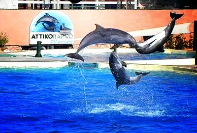 Δελφινάριο Αττικού πάρκου.
